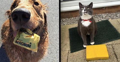 21 lustige Geschenke von Hunden und Katzen an Besitzer