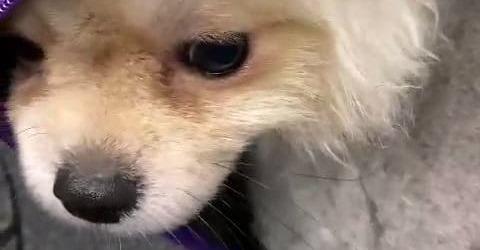 Frau (24) schmuggelt Mini-Hunde aus der Türkei