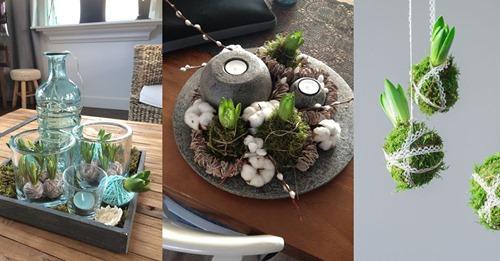 Die Festtage sind wieder vorbei… aber wie kann ich mein Haus am besten dekorieren? Fang einfach mit ein paar hübschen Blumenzwiebeln an! 8 DIY-Ideen
