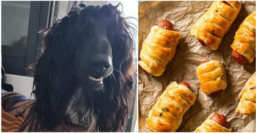 Nägel in Hotdogs ausgelegt: Hund stirbt durch hinterhältige Köder Falle beim Gassi