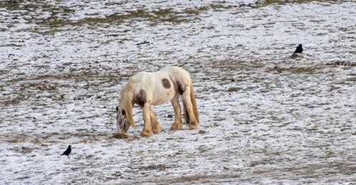 MIESE ATTACKE Tierquäler sticht auf Pferd ein