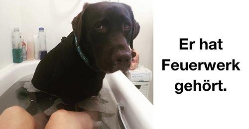 Niedliche Hunde: 15 Hundebilder, die für gute Laune sorgen