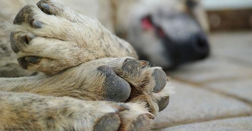 Rentnerin (73) lieh ihm geliebten Hund: Unbekannter Gassigeher bringt Hund tot zurück