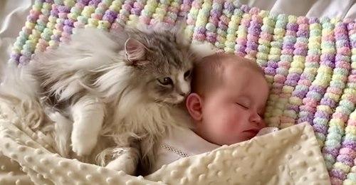 Eine riesige Maine Coon Katze schläft neben einem Baby in einem herzerwärmenden Clip
