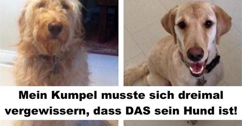 15 Hunde, die nach dem Friseur nicht mehr dieselben sind
