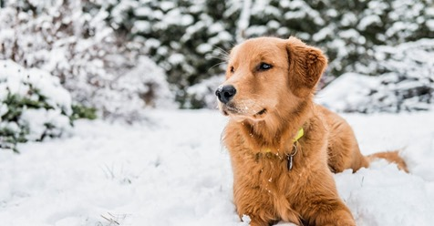 Pärchen rettet festgefrorenen Hund – und kassiert Anzeige wegen Corona-Verstoß