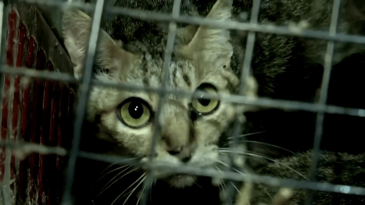 300 Katzen wurden in völlig verschmutztem Haus entdeckt – werden in letzter Sekunde gerettet