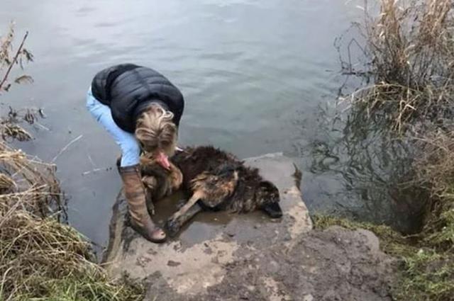 Hund, der an Felsen gebunden aufgefunden und von seiner Besitzerin zum Ertrinken zurückgelassen wurde, findet ein neues Zuhause