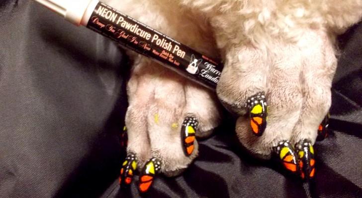 Die Nägel von Hunden und Katzen für ästhetische Zwecke färben: die neue absurde Mode, die Risiken birgt