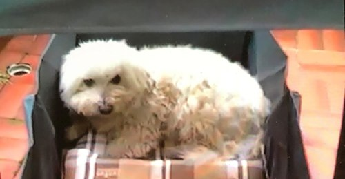 Kampfhund biss Malteser Malte tot