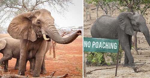 Mutmaßlicher Wilderer stirbt in Nationalpark – er wurde wohl von Elefanten zu Tode getrampelt