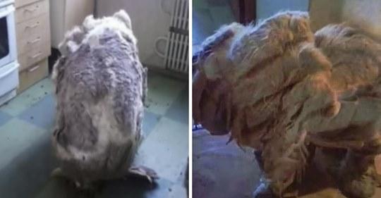Hund wird verlassen in Küche gefunden und verwandelt sich in neues Geschöpf, nachdem 4 Tüten voller Fell abrasiert wurden