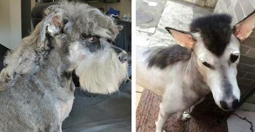 Lustige Bilder: 20 Hunde mit Vokuhila