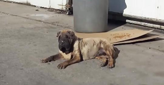 Rettungshelfer finden geschwollenen, älteren Hund - herzlose Besitzerin behauptet, sie