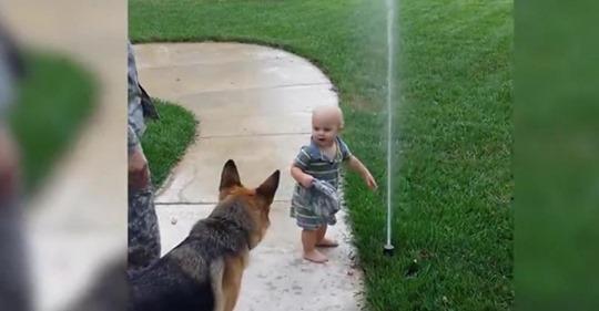 Süßes Baby hilft dem Deutschen Schäferhund mit der Angst vor Sprinkler