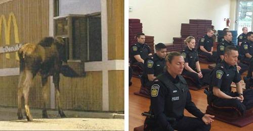 Leben in Kanada: lustige Bilder aus dem kanadischen Alltag