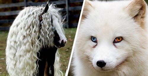 Wenn die Realität die Fantasie übertrifft: 15 Tiere, die Mutter Natur zu Unikaten gemacht hat