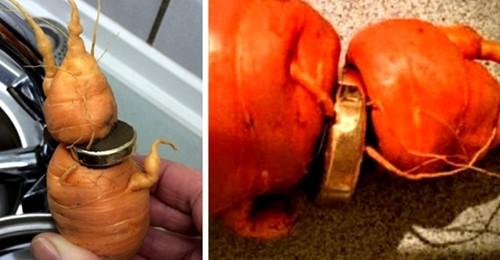 Ein alter Mann findet seinen Ehering nach drei Jahren auf einer Karotte wieder: Sein Gemüsegarten hat ihm das Kostbarste zurückgegeben