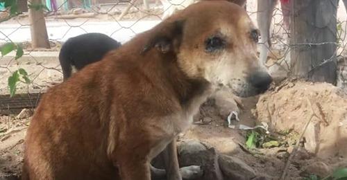 Kinder quälen und ärgern alte Hündin, die sich in Gebüsch versteckt hat – Tierschützer schreiten ein
