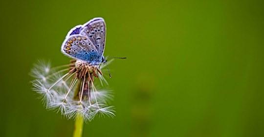 Schmetterlinge in Not: Warum ihr Lebensraum schwindet