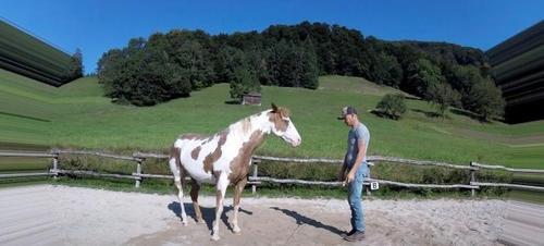 Ein Mann beginnt einen berühmten Tanz aufzuführen, aber sein Pferd stiehlt ihm das Rampenlicht