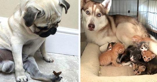 11 Bilder von Hunden, bei denen es unmöglich ist, ernst zu bleiben
