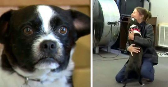 Sie verliert ihren Hund und findet ihn nach 2 langen Jahren wieder:
