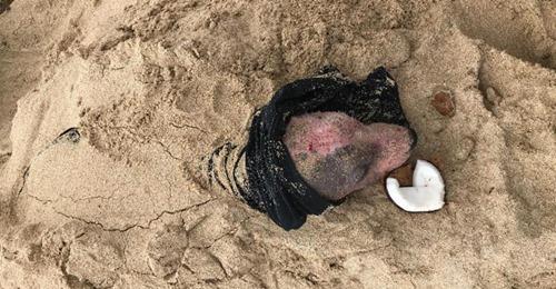 "Hündin ""Leialoha"" lebendig am Strand von Hawaii begraben"