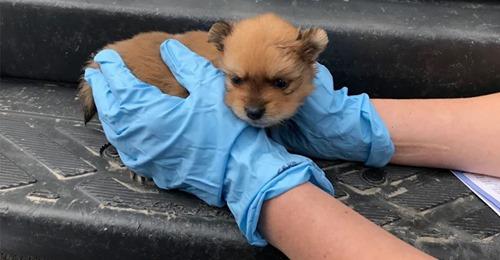 Bremen: Paar (24, 26) verkauft aus Auto heraus Hundewelpen – Polizei befreit verängstigte Tiere aus Transporter