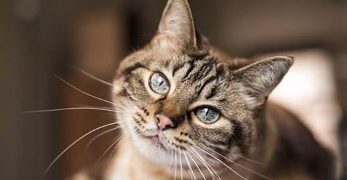 Baden-Württemberg: Hauskatze geköpft und Schwanz abgetrennt