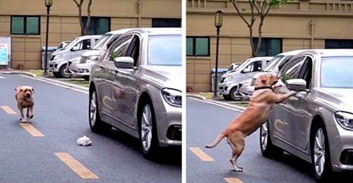 Ein ungehobelter Autofahrer wirft Papier aus dem Fenster, aber ein vorbeilaufender Hund erteilt ihm eine Lektion