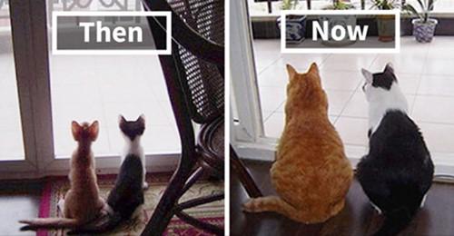 Sehr niedlich: Bilder von Tieren, die zusammen aufgewachsen sind, die Ihr Herz zum Schmelzen bringen!