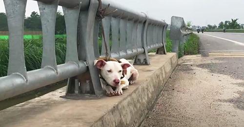 Hund wird an Autobahn rücksichtlos ausgesetzt – Tierretter stellen fest, dass seine Leine viel zu kurz war