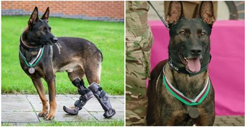 Heldenhafter Hund erhält höchste militärische Medaille – war in Afghanistan im Einsatz