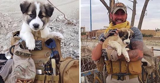 Syrischer Hund reist 5000km nach paris, um den Soldaten zu treffen, der ihn gerettet hat.