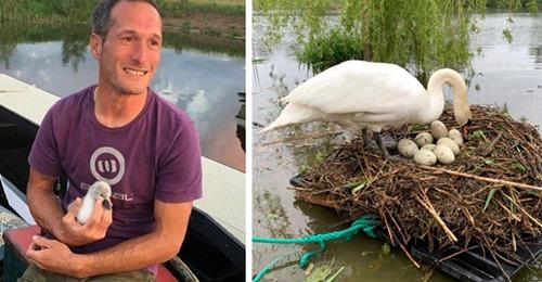 """Er baut ein Floß, um das Nest zweier vom Pech verfolgter Schwäne in Sicherheit zu bringen: """"Ich wollte nicht, dass sie die Eier wieder verlieren."""""""