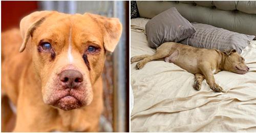 Misshandelter und blinder Hund hat zum ersten Mal im Leben ein richtiges Bett