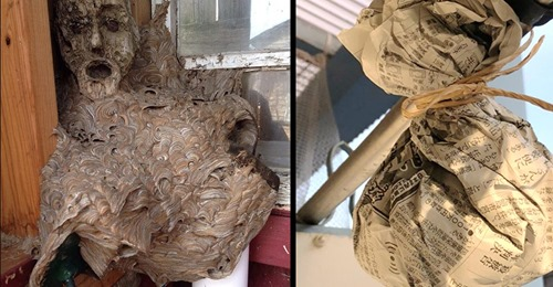 Nie wieder Wespennest: Trick mit Zeitung hindert Wespen am Nestbau