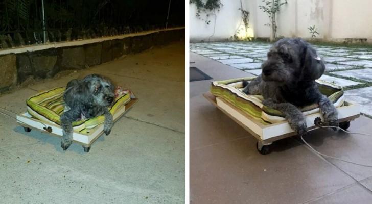 Er baut einen Rollwagen, um mit seiner alten Hündin spazieren zu gehen: Sie kann ihre Hinterbeine nicht mehr bewegen