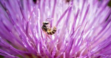 29 Jährige hat 4 lebende Bienen im Auge, ohne es zu merken