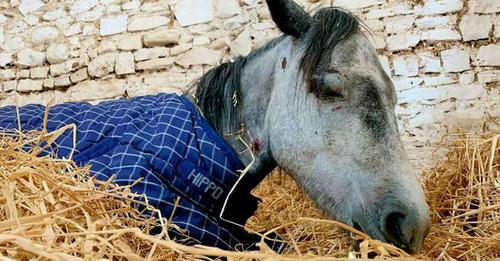 Pony stirbt vor den Augen seiner Retter: Jugendliche schlugen auf Tier ein & ließen es verletzt zurück