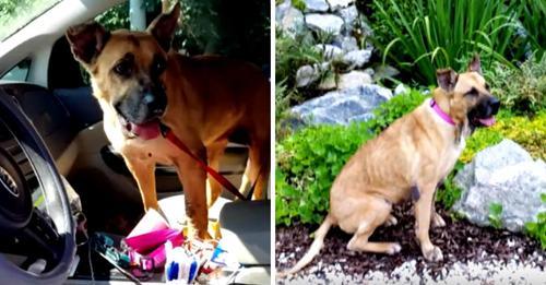 Frau fragt Tierheim nach ältestem, am meisten vernachlässigten Hund und geht schließlich mit zwei Hunden nach Hause