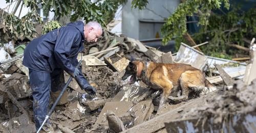 NACH DER TODESFLUT Spürhunde suchen Opfer unter den Trümmern