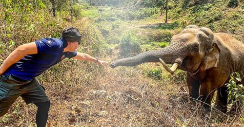 Tierarzt trifft den Elefanten, den er 12 Jahre zuvor gerettet hat: Wir haben uns erkannt und uns begrüßt