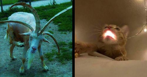 Lustige Tierbilder: 17 'unheimliche' Tiere