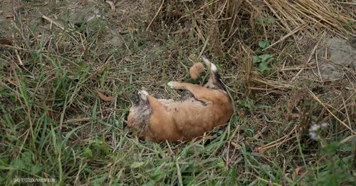 Tierquäler erschießt eigenen Hund im Wald: Rüde war mit Leine an Baum festgebunden