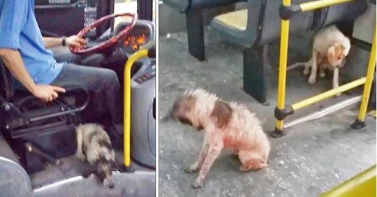 Busfahrer fand Hunde, die bei Gewitter froren, bricht Regeln und bringt sie in den Bus