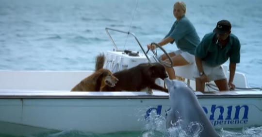 Hund auf See mit Familie erhält überwältigendes Geschenk von Delfin