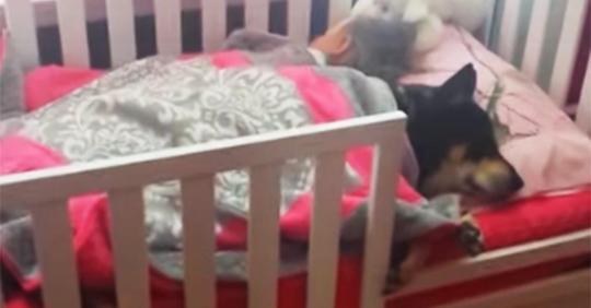 Frau sieht nach Kleinkind und beginnt zu filmen, als sie merkt, dass geretteter Hund neben ihr schläft