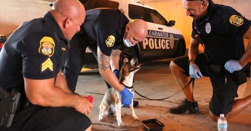 Drei Polizisten bemerken einen Hund, der in einem heißen Auto ausgesetzt wurde: Sie reißen die Tür auf, um ihn zu retten